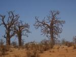 Senegal: Casamance y País Bassari