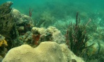 Corals Coral Key - Bastimentos - Bocas del Toro