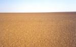 Desierto pedregoso - Sahara