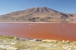 Reserva de Fauna Andina Eduardo Avaroa: Cielos de Cóndores