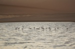 Flamencos en el Bird Sanctuary de Walvis Bay