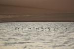 Flamencos en el Bird Sanctuary de Walvis Bay