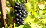 La Cite du Vin - Enoturismo en Burdeos