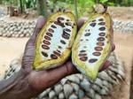 República Dominicana: Rutas turíticas del Cacao
