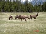 Rocosas de Canadá (más Seattle y Glacier National Park) 2016