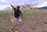 Cocodrilo en el Río Tárcoles