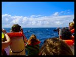 Avistación Ballenas jorobadas en la bahia Samanà
