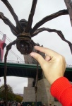 Go to photo: Catching the spider's Guggenheim
