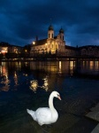 Nocturnal Swan Lucerna, Suiza