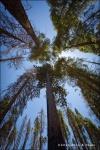 Oeste de EEUU: Las Vegas - El Gran Cañón - Los Ángeles - Yosemite - San Francisc