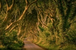 The Dark Hedges, Ballymoney, Antrim, Irlanda del Norte