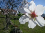 Ruta por los Almendros en Flor del Algarve - Portugal