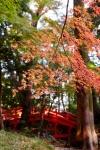 Planes para disfrutar de los paisajes otoñales de Tokio