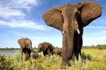 TRAS LA SENDA DE LOS ELEFANTES: Botswana, Zimbabwe y Cataratas Victoria