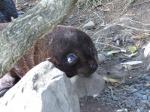Fauna de Nueva Zelanda