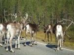 Laponia con niños. 4 días en Rovaniemi