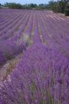 Aviñón- Aix de Provence- Cassis