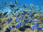 Aventuras en Maldivas (parte II Aventuras en Sri Lanka y Maldivas)