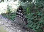 Mariposa en Iguazú