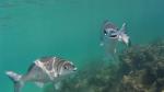 Simpáticos peces que sonríen a la cámara