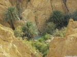 Oasis en Túnez