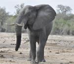 Todo un señor elefante