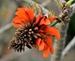 Floración en el Desierto del Kalahari - Sudáfrica