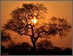 atardecer en el Kruger