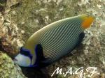maldivas019