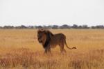Viaje en familia por SUDÁFRICA y SUAZILANDIA (Esuatini)
