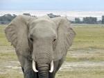 De safari: MAASAI MARA