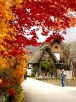 Monte Takao: Senderismo, naturaleza y momiji