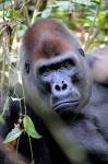 NDIMA NABONÉ (La selva es la madre)