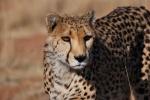 Namibia en luna de miel