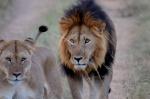 MEMORIAS DE KENIA 14 días de Safari