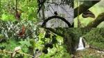 Jardines y Catarata de Mandor