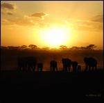 LA MAGIA DE ÁFRICA, KENIA