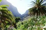 RECORRIENDO TENERIFE (ISLAS CANARIAS). VACACIONES EN LA ISLA DE LOS CONTRASTES.
