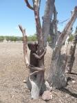 Namibia- Bostwana y cataratas victoria