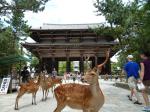 Etapa 6: Takayama: el japón rural de los Alpes Japoneses