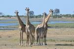 Botswana: en estado puro