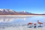 Lagunas Altiplánicas, ruta Salar de Uyuni