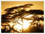 12 días de Safari en Kenia: Jambo bwana