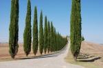 6 días en la Toscana, con Niños