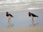 Gemelos en Fraser Island