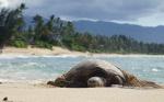 Costa de Napali desde el mar: el paraíso más salvaje