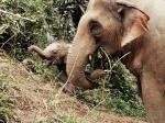 Elephant Freedom,  Chiang Mai