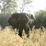 Hwange National Park, territorio salvaje