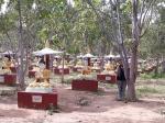 Bosque de Budas