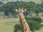 Tanzania por libre